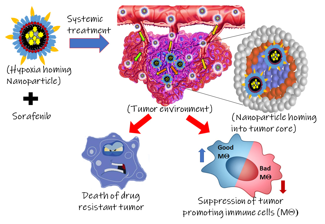 Researchers from Wayne State University have developed tumor hypoxia directed nanoparticle in combination with the FDA-approved drug, Sorafenib, that showed promising outcomes in inhibiting tumor promoting immune cells and killing drug resistant renal cell carcinoma. This nanoplatform can be further utilized for treatment of other solid tumors containing hypoxic tumors.